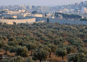 A wall runs through it: a Palestinian olive grove cut in two by the separation barrier.Ahikam Seri / Panos