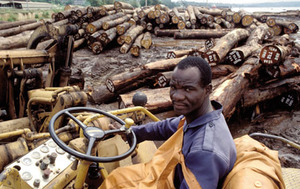 Destruction in the name of progress: hardwood rainforest logs being stacked for export near Abidjan, Ivory Coast.