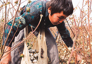 Don't buy Uzbek cottonPhoto by: environmental justice foundation