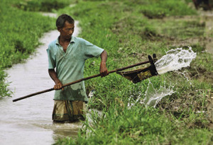 Thirsty work: a man pours water from a stream into his paddy field. Excessive irrigation has caused groundwater levels in north India to drop dramatically.