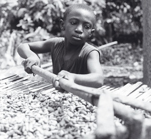 Sweet nothings: chocolate companies have failed to curb child labour on cocoa farms in Cote d'Ivoire.Photo by International Labor Rights Forum