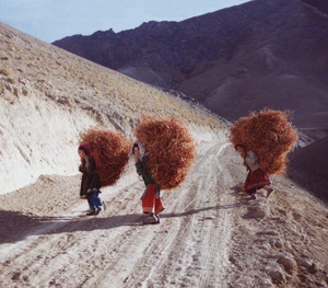 Agriculture – on which most Afghans depend – has been neglected.Ali Omid / Aina Photo Agency / Afghanistan
