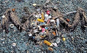 Carcass of a Laysan albatross one of the first victims of the plastic plague in the North Pacific. Bottle caps, cigarette lighters, pens, toothbrushes mixed with plastic fragments.Photo: Algalita Marine Research Foundation