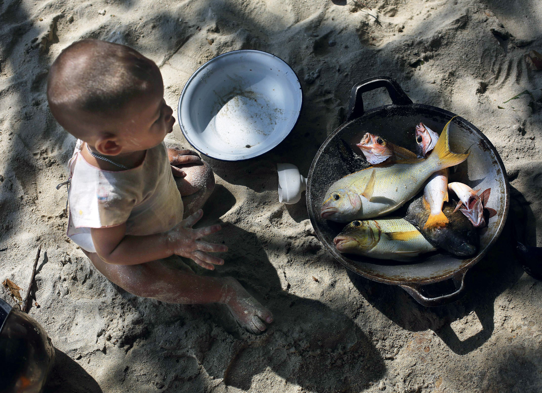 A Moken child eyes his lunch. The Mergui archipelago, where he lives, is rich in marine biodiversity. With 116 languages, Burma is also a language hotspot. <br />