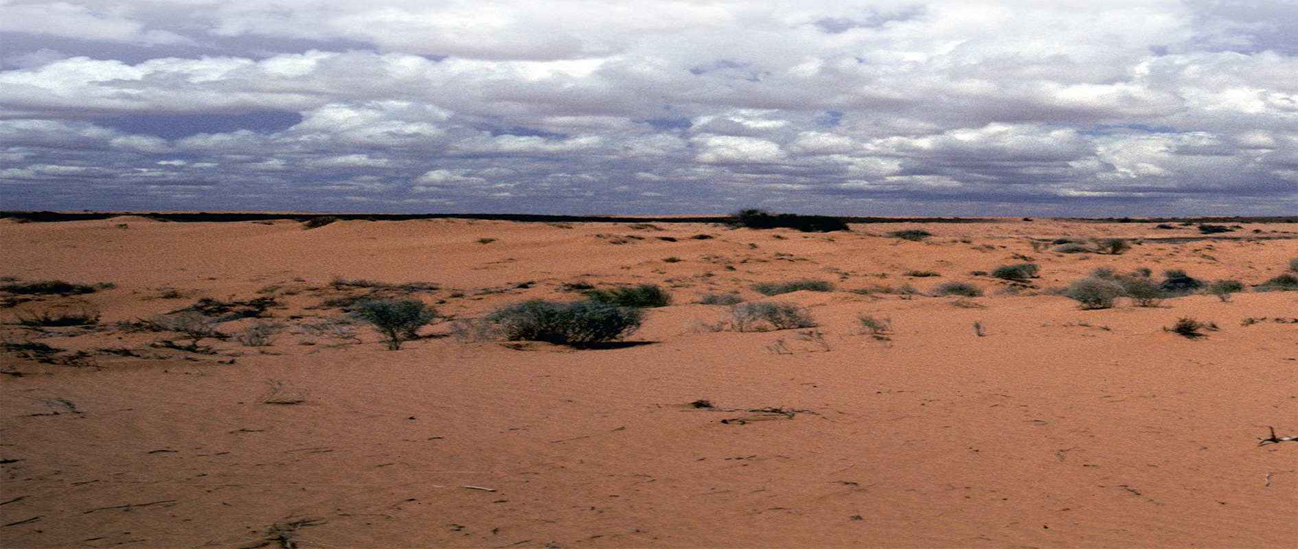 More than just words, 'our language is linked to our land,' say Kaurna Elders.