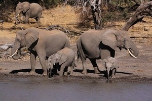 Africa fights back against poachers Derek Keats under a CC Licence