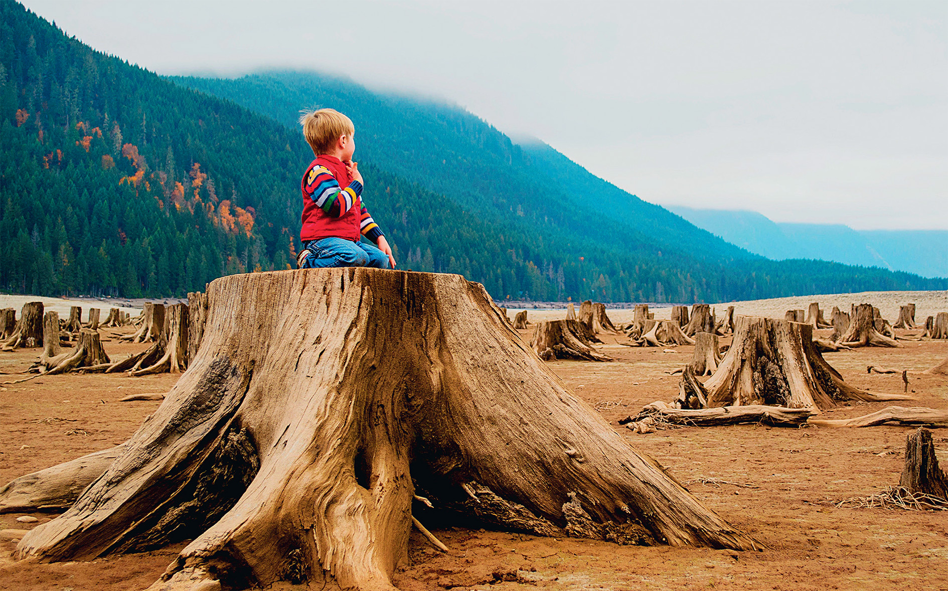 Stumped: a young boy surveys the remains of giant conifers on a mist-shrouded inlet in the US Pacific northwest.