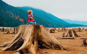 Stumped: a young boy surveys the remains of giant conifers on a mist-shrouded inlet in the US Pacific northwest. RooM the Agency/Alamy