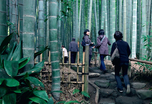 A group of women enter the bamboo forest garden at Hokokuji Temple in Kamakura, Japan.