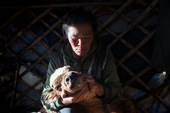 Mongolian herder Doljin Byambasurengiin lost more than 200 livestock to this year's winter disaster.
