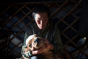 Mongolian herder Doljin Byambasurengiin lost more than 200 livestock to this year's winter disaster.Photo: Madoka Ikegami
