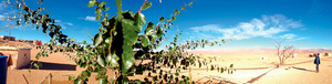 Under threat: fertile valleys in the Sahara face mining pollution.
