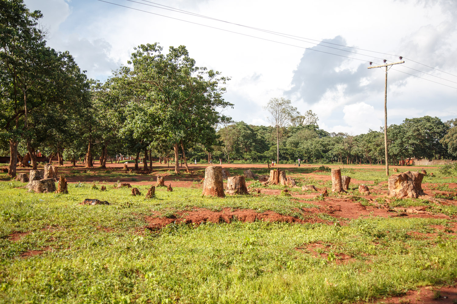 Tree stumps following deforestation. Less than 10 per cent of Malawians have access to the country's unreliable electricity network.
