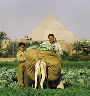 Agriculture is high on the list for change in Egypt.Mark Henley / Panos
