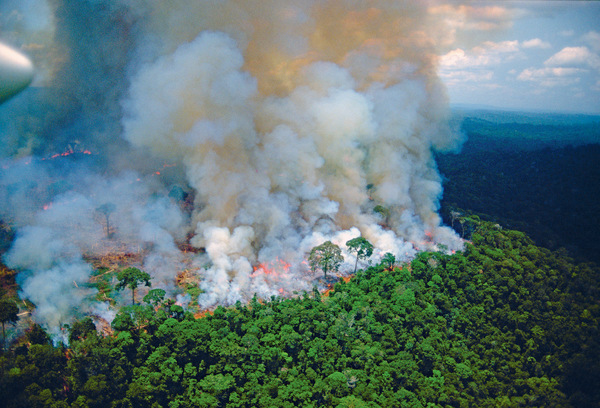 Another chunk of the Amazon rainforest goes up in smoke. In the last 10 years alone, 38,600 km2 (equal to 8.4 million football fields) has been deforested for ranching, logging, soy and oil-palm cultivation. Photo: Loren McIntyre/Stock Connection Blue/Alamy