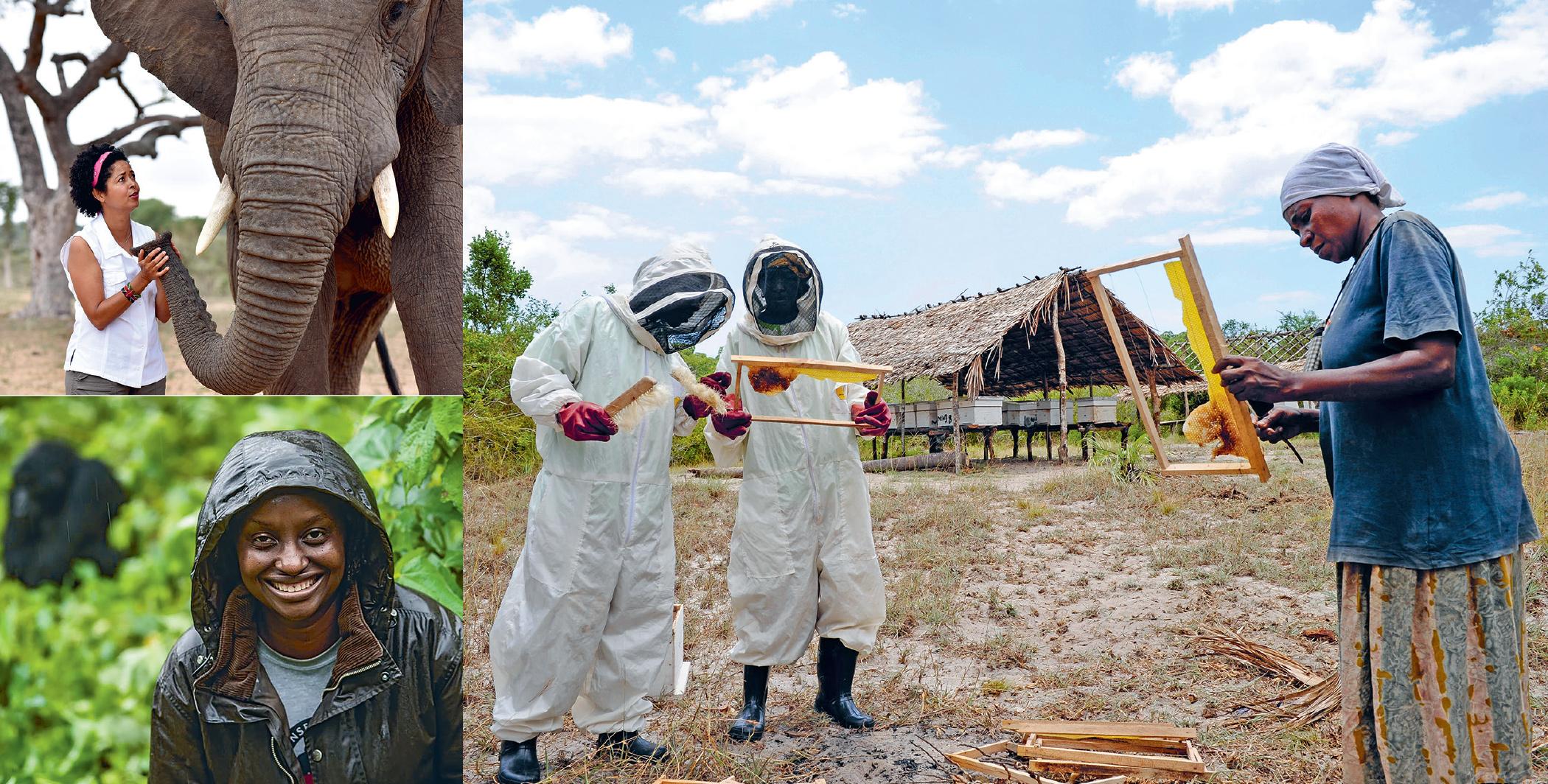Top left: Paula Kahumbu. Bottom left: Gladys Kalema-Zikusoka. Main image: Bee keepers in Vanga, near Mombasa, Kenya. The honey contributes to local incomes and the hives act as an elephant deterrent.