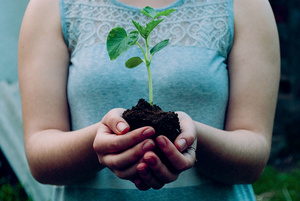 Tree-planting overkill? There literally isn't enough room on the planet to host all the corporate carbon-offsetting plans.Photo: Nikola Jovanovic/Unsplash