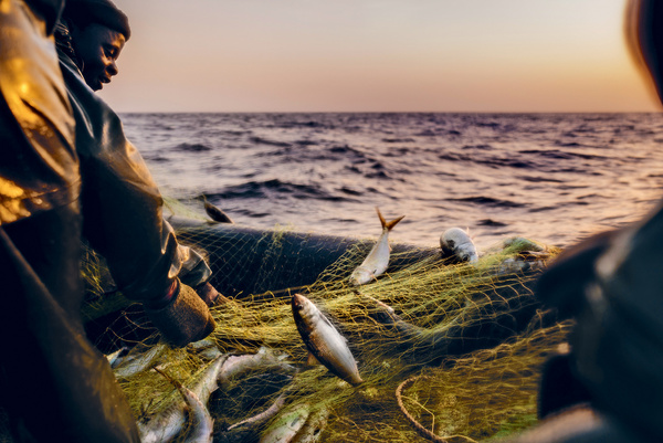 Far out. Fishers haul in their catch some 60 kilometres off the coast of Saint Louis, Senegal. They report travelling further, for longer, to catch ever-dwindling amounts of sardinella. Photo: Alfredo Caliz/Panos Pictures