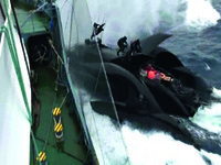 Too close for comfort: the Ady Gil approaches the Japanese whaling vessel Shonan Maru 2.